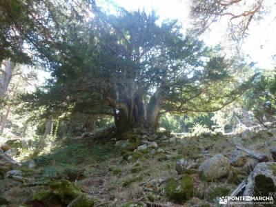 puente san jose sierra de irati excursiones en madrid cerezo en flor valle del jerte
